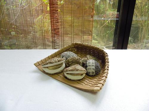 貝のセット